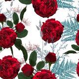 Ilustração de flores, de bagas e de ervas vermelhas Teste padrão sem emenda das rosas e da samambaia no fundo branco ilustração do vetor