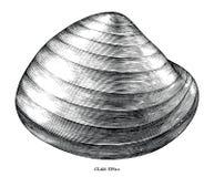Ilustração de gravação antiga do clipart preto e branco dos moluscos isolada no fundo branco ilustração do vetor