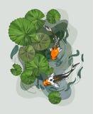 A ilustração de lírios de água sae de flores da American National Standard e de carpa do koi ilustração royalty free