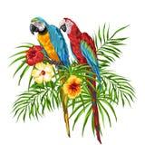 Ilustração de papagaios da arara Ilustração do Vetor