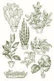 Ilustração de plantas dos houseplants, as internas e do escritório no potenciômetro Grupo de planta da casa isolado Casa linear d Imagens de Stock Royalty Free