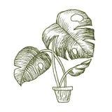 Ilustração de plantas dos houseplants, as internas e do escritório no potenciômetro isolado no fundo branco Casa linear do esboço ilustração do vetor