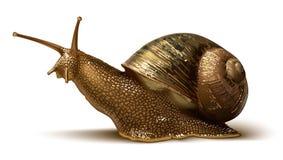 Ilustração de um caracol Foto de Stock Royalty Free