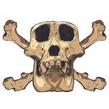 Ilustração de um crânio do macaco no fundo Vetor Imagens de Stock