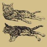 Ilustração de um encontro de dois gatos Fotografia de Stock