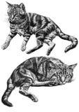 Ilustração de um encontro de dois gatos Fotos de Stock Royalty Free
