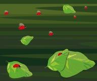 Ilustração de um joaninha Foto de Stock Royalty Free