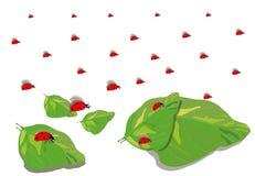 Ilustração de um joaninha Fotos de Stock