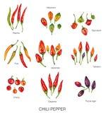 Ilustração de Watercolo de pimentas de pimentão Fotos de Stock