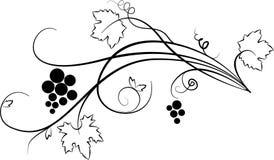 Ilustração decorativa da uva (esboço) Foto de Stock