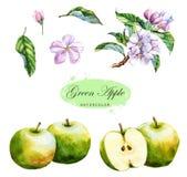 Ilustração desenhado à mão da aquarela das maçãs verdes Foto de Stock Royalty Free