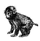 Ilustração desenhado à mão do esboço pequeno do desenho do macaco ilustração stock