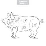 Ilustração desenhado à mão do vetor do porco Imagens de Stock