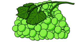 Ilustração detalhada de um grupo de uvas com todos os detalhes de sua pele e de suas folhas ilustração stock