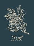 Ilustração do aneto do vetor no fundo escuro Esboço tirado mão da planta da especiaria Desenho botânico da erva aromática Imagem de Stock