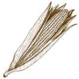 Ilustração do bloco xilográfico da gravura do milho no fundo branco Fotografia de Stock