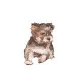 Ilustração do cão yorkie watercolor Foto de Stock