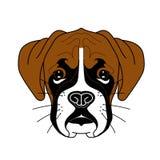 Ilustração do cachorrinho bonito do pugilista com as orelhas marrons grandes e o nariz preto no vetor Fotografia de Stock