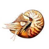 Ilustração do camarão do mar Foto de Stock Royalty Free