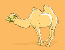 Ilustração do camelo Imagem de Stock