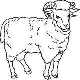 Ilustração do Carneiro-vetor do desenho da mão Foto de Stock