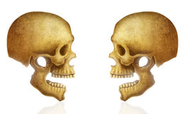 Ilustração do crânio humano Fotos de Stock