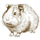 Ilustração do desenho da gravura da cobaia Imagem de Stock