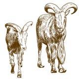 Ilustração do desenho da gravura de duas cabras de montanha Foto de Stock Royalty Free