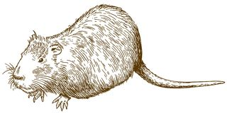 Ilustração do desenho da gravura do nutria ou do coypu Imagem de Stock Royalty Free