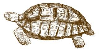 Ilustração do desenho da gravura da tartaruga grande Imagem de Stock