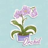 Ilustração do desenho da mão de uma orquídea ilustração royalty free