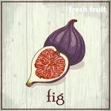 Ilustração do desenho da mão do figo Fundo do esboço do fruto fresco ilustração royalty free