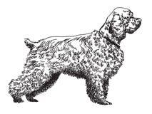 Ilustração do desenho da mão do vetor do spaniel Foto de Stock