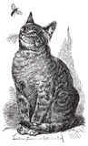 Ilustração do desenho do gato do vetor Imagem de Stock