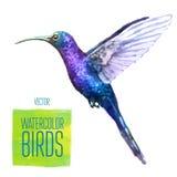 Ilustração do estilo da aquarela do vetor do pássaro Fotos de Stock Royalty Free