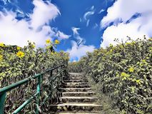 Ilustração do expressionista dos desenhos animados da escada bonita no meio da natureza com florescência de girassóis selvagens ilustração royalty free