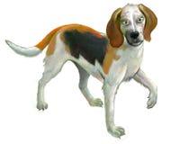 Ilustração do foxhound americano ereto bonito no fundo branco Foto de Stock