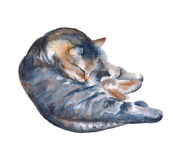 Ilustração do gato em um fundo branco Ilustração da aguarela Imagem de Stock