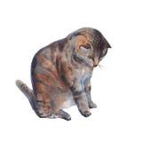 Ilustração do gato em um fundo branco Ilustração da aguarela Fotografia de Stock Royalty Free