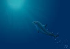 Ilustração do golfinho da natação Fotografia de Stock