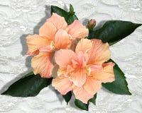 Ilustração do hibiscus e do laço ilustração royalty free