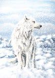 Ilustração do lobo ilustração stock
