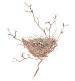 Ilustração do ninho do pássaro da aquarela com os ovos nos ramos de árvore, mão tirada em um fundo branco Imagem de Stock