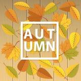 Ilustração do outono com as folhas no fundo de madeira brilhante Fotos de Stock