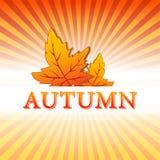 Ilustração do outono com folhas e raios da queda ilustração do vetor