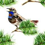 Ilustração do pássaro azul bonito no pinho do ramo Imagem de Stock Royalty Free