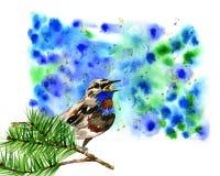 Ilustração do pássaro azul bonito no pinho do ramo Fotos de Stock