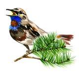 Ilustração do pássaro azul bonito no pinho do ramo Fotos de Stock Royalty Free