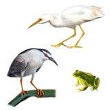 Ilustração do pássaro da garça-real de noite, grande branco Fotos de Stock Royalty Free