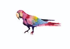 Ilustração do papagaio da arara Fotos de Stock